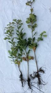plant met wortel